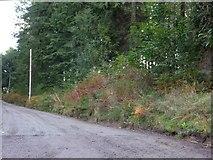 SS6710 : Bridleway in Flashdown Plantation by David Smith
