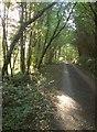 SX3464 : Lane through Leigh Plantation by Derek Harper