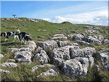 SH7783 : Limestone pavement by Jonathan Wilkins