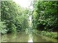 SU2263 : Heron flying eastwards, Kennet & Avon canal by Christine Johnstone