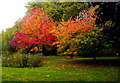 TQ3089 : Autumnal scene, Priory Park by Julian Osley