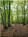 SU8285 : Track through beech woodland, Hollowhill Wood by Stefan Czapski