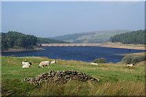 SJ9775 : Sheep above Lamaload Reservoir by Bill Boaden