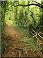 ST6277 : Path up Sims' Hill by Derek Harper
