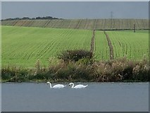 SK4569 : Lake and fields by Andrew Hill