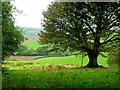 SO4903 : Oak in pasture by Jonathan Billinger