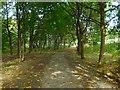 NS3978 : Path around industrial estate by Lairich Rig