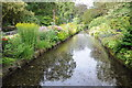 SJ7387 : Water Gardens, Dunham Massey by Philip Halling