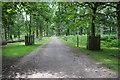 SJ7486 : Parkland drive, Dunham Massey by Philip Halling