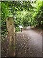 ST5777 : Badock's Wood by Derek Harper