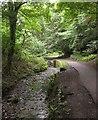 ST5777 : Stream, Badock's Wood by Derek Harper