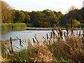 TF1703 : Cuckoo's Hollow, Werrington by Paul Bryan