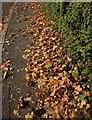 SX9065 : Autumn leaves, Teignmouth Road, Torquay by Derek Harper