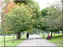 NT2572 : Autumn in Bruntsfield Links by kim traynor