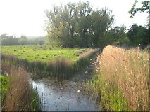 TG2105 : A junction of ditches on Marston Marshes by Rod Allday