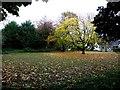H4864 : Fallen leaves, Seskinore by Kenneth  Allen