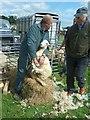 SJ0209 : Sheep shearing at Llanfair Show by Penny Mayes