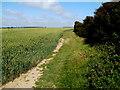 SS9667 : Glamorgan Heritage Coast path east of Llantwit Beach by Jaggery