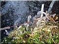 SX7477 : Ice on grass, Becka Brook by Derek Harper