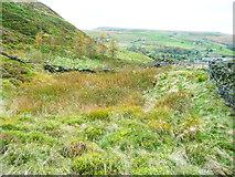 SE0511 : Marshy hollow beside a footpath by Humphrey Bolton