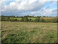 TQ4993 : Pasture, Havering Park Farm, Hainault Forest by Roger Jones