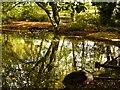 SD8204 : Dell Reflections, Heaton Park by David Dixon