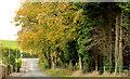 J4059 : Autumn trees, Saintfield by Albert Bridge