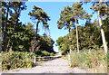 SK4613 : Track and gate near Bardon Hill summit by Mat Fascione