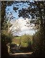 SX3361 : Lane to Tilland by Derek Harper