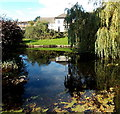 ST2996 : Reflections on a canal pond, Pontnewydd, Cwmbran by Jaggery