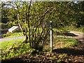 SX3361 : Junction, Tilland by Derek Harper