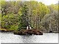 NN4907 : Small Island to the South of Am Priosan, Loch Katrine by David Dixon