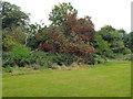 SP2865 : Rowan tree in fruit, Priory Park, Warwick by Robin Stott