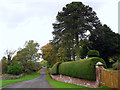 NY5550 : A monkey puzzle tree and neat hedge by Rose and Trev Clough