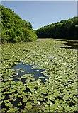 SR9694 : Bosherston Lily Ponds by Mr Eugene Birchall