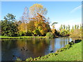 SP5107 : Autumn leaves, duck pond, University Parks, Oxford by David Hawgood
