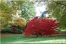 SX7962 : Autumn colours by jeff collins
