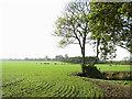 TM4394 : Fields by Waterheath by Evelyn Simak