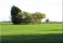 TM4494 : Trees in field by Waterheath by Evelyn Simak