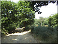 TQ4778 : Path through Bostall Woods by Stephen Craven