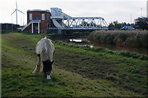TA0832 : The riverside path near Sutton Road Bridge, Hull by Ian S
