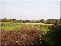 J3633 : View across a grazing field towards houses on the Castlewellan Road (A50) by Eric Jones