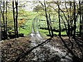 TQ6329 : Looking out South of Underland Wood Wadhurst Park Estate by Peter Skynner