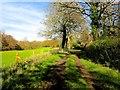 TQ6229 : Wadhurst Park Farm Service Road by Peter Skynner