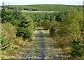 SN8156 : Forestry road in Cwm Nant Cloddiad, Powys by Roger  Kidd