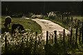 SH5169 : Driveway to Plas Llwynonn by Ian Capper