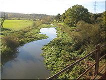 TQ1094 : River Colne from Ebury Way, Watford by Nigel Cox