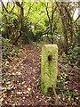 ST5869 : Supposed footpath near Hartcliffe Way by Derek Harper