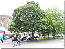 TL1314 : Tree Lined Lower High Street by Gary Fellows
