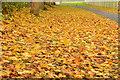 J4173 : Autumn leaves, Dundonald by Albert Bridge